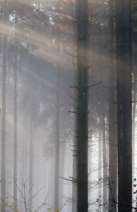 IMG_2572_Wald_Nebel_Sonne_web